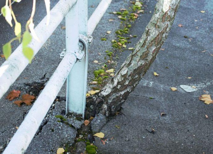 ein baum wächst aus asphalt