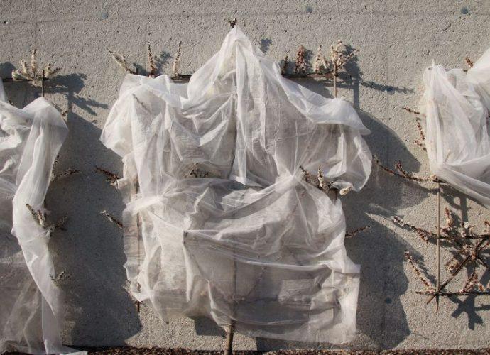 bäume an einer mauer mit weißem tuch verhüllt